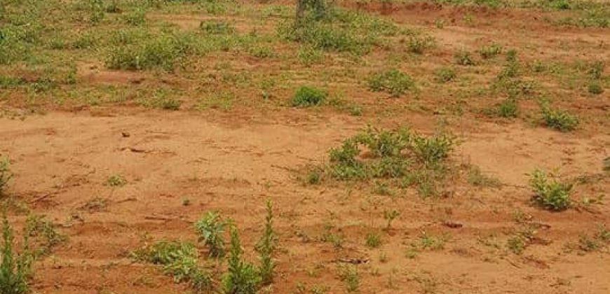 1 ACRE AGRICULTURAL LAND FOR SALE