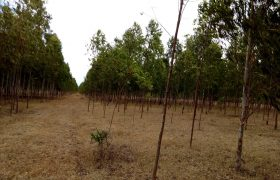Plots for Sale in Laikipia