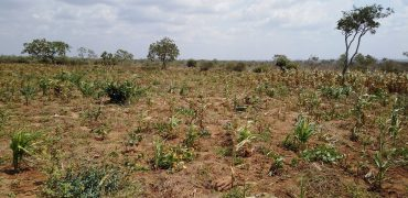 Affordable 1/8 Plots in Malindi