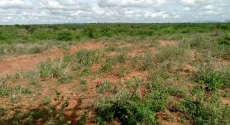 OFFER!! OFFER!! JUJA FARM PRIME PLOTS @ 350K ONLY