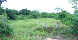 Eighth Acre (50×100) Plots for Sale in Malindi – Ksh 45000 (Pay Ksh300 Daily)
